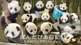 ぱんだぴあ日記 ユルふわパンダがいっぱい!